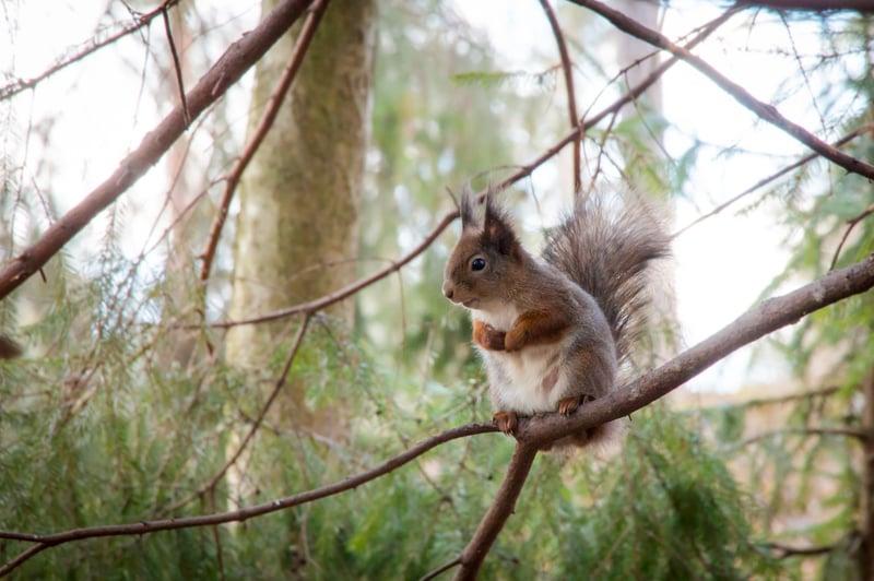 squirrel-2301394_1920